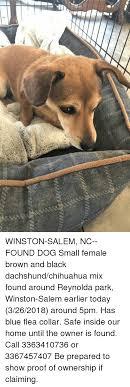 chihuahua memes and black winston m nc found dog