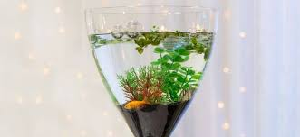 27 small fish tank ideas complement