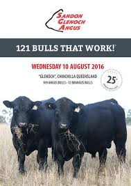 today s angus advantage 2016 bull buyer s guide by today s sandon glenoch angus 2016 bull brochure