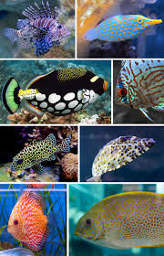 Fish Patterns