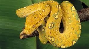 cute snake wallpaper. Fine Cute HD Snakes Wallpapers And Photos  Animals For Cute Snake Wallpaper D