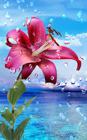 Summer Rain Flowers HD LWP  Android Apps On Google PlayFull Hd Live Wallpaper For Android Free Download