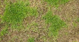Brown Patch Disease Understand The Signs Of Brown Patch Lawn Disease