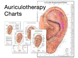 Auriculotherapy Chart Points Auricular