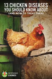 Chicken Disease Chart 13 Common Chicken Diseases You Should Know And How To Treat
