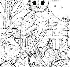 Barn Owl Colouring Pages Animal Color Pages Barn Owl Coloring Pages