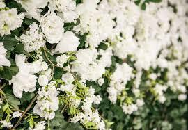 Flower Wall Flowerwallco Flowerwall Rental Backdrops And Decor For