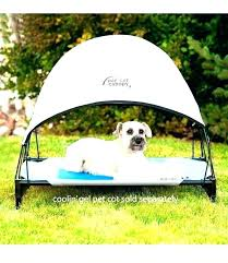 outdoor dog bed amazon – radically amazed