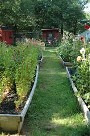 garden notes south eastern massachusettes succession planting tricks and trials for cut flowers
