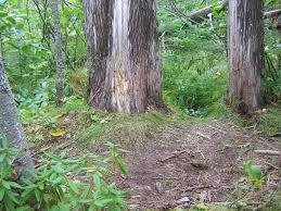 summer beds north american bear