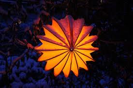 Gratis Afbeeldingen Boom Natuur Tak Sneeuw Licht Fabriek