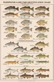 Freshwater Fish Identification Chart Warmwater Game Fish Poster And Identification Chart