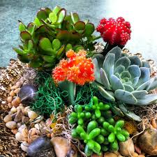 Small Picture Succulents and moon cacti dish garden In House Garden Design