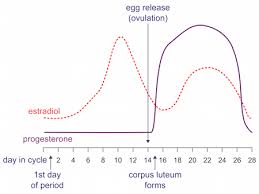 Normal Progesterone Levels In Pregnancy Chart The Right Way To Test Progesterone With Your Cycle