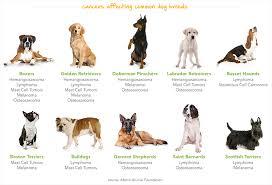 7 common pet cancer myths debunked