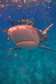 Celebs ride the 'Shark Week' craze on ...