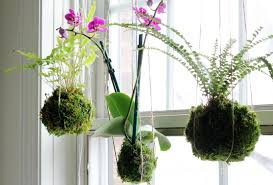 Decorating With Moss Balls String Planters A New Trend Bringing Us Closer To Nature 41