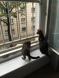 Fenster Katzennetze Wien