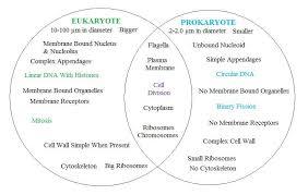 Compare Prokaryotic And Eukaryotic Cells Venn Diagram Prokaryotic Vs Eukaryotic Cells The Cell