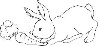 Disegni Conigli Coniglio Migliori Pagine Da Colorare