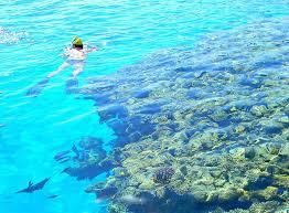 Картинки по запросу риф в набке