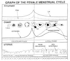 Female Cycle Chart Hoover Al Apol Chiropractic