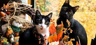 Image result for thanksgiving pet safety cats