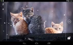 Q Cat Live Wallpaper- screenshot