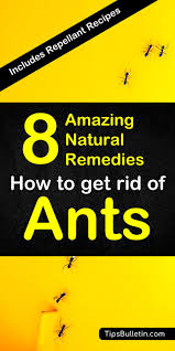 how to get rid of ants with detailed natural pest control recipes using home remes