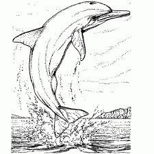 Kleurplaten Dolfijnen Mandala