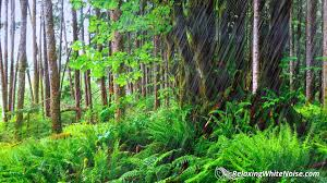 tropical rainforest raining. Plain Tropical Forest Rain Sounds For Sleeping Or Studying  10 Hours Nature White Noise   YouTube To Tropical Rainforest Raining N