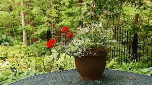 Small Picture A Gallery of Beautiful Container Garden Ideas