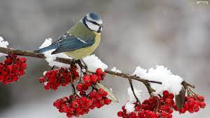 Free Desktop Wallpaper Winter Birds