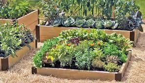 raised beds used to make a kitchen garden