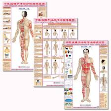 Us 15 08 Chinese Cupping Ba Guan Therapy Techniques With The Standard Wall Charts Front Back For Common Disease In Flip Chart From Office
