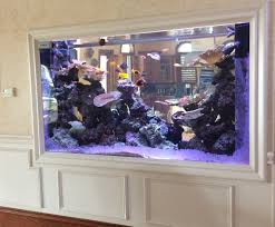 office aquariums. custom freshwater and marine tanks for your home office aquariums