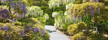 wisteria garden at longwood gardens photo credit longwood gardens