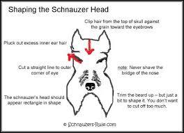 Dog Haircut Chart Miniature Schnauzer Grooming Chart