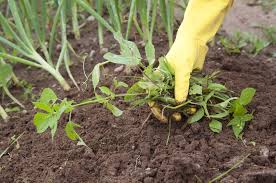 3 Ways to Control Weeds Without Chemicals