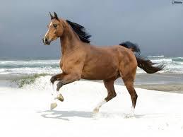 Risultati immagini per cavallo marrone mare