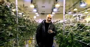 La millonaria fortuna que gana Mike Tyson con la venta de marihuana -