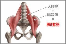「腸腰筋 アスリート」の画像検索結果
