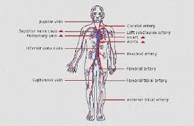 Self Defense Pressure Points Chart Pdf Self Defense