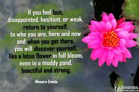 Short Lotus Flower Quotes Best Quotes Messages In Hd Image