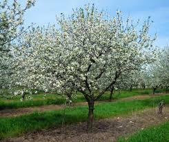 What Fruit Trees Grow In Michigan  Garden GuidesFruit Trees In Michigan