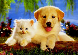 cute kittens and puppies together wallpaper. Perfect Cute Baby Animals Images Baby Puppy U0026 Kitten Wallpaper And Background Photos Throughout Cute Kittens And Puppies Together Wallpaper S
