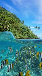 Underwater wallpaper, Ocean wallpaper ...