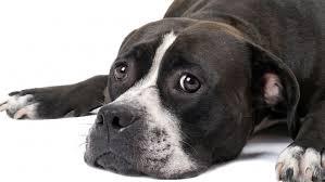 Aufregende Zeit Für Tiere Wie Hund Und Katze Die Festtage