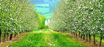 What Fruit Trees Grow In Michigan