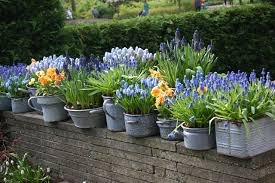 bulb garden. So You Love Tulips, Daffodils, Hyacinth\u2026the List Goes On. But Maybe Live In A Condo Or Apartment With Only Balcony And No \u201cyard\u201d Per Say. Bulb Garden